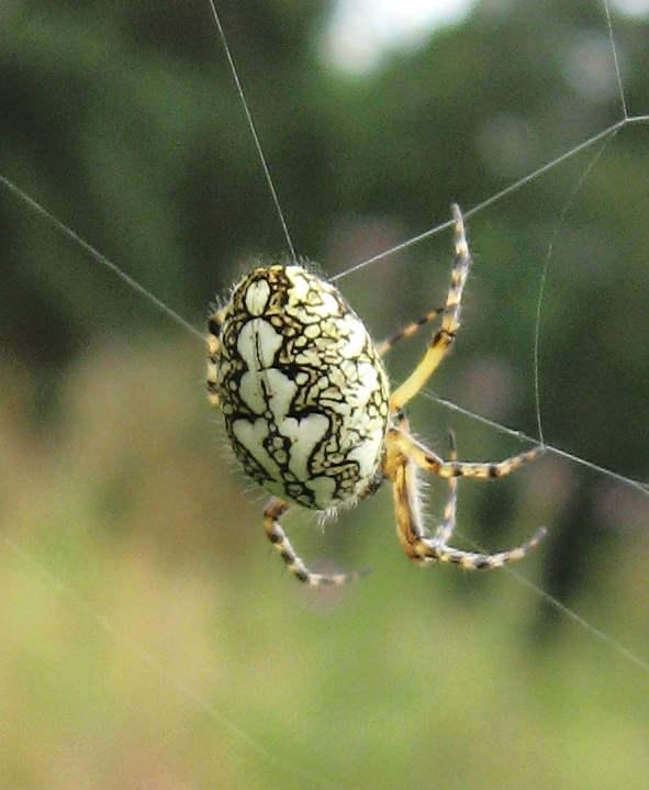 виды пауков фото россия фирма предоставляет услуги